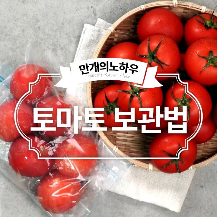 토마토 보관법